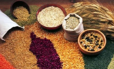Whole-Grain-Group-Pic
